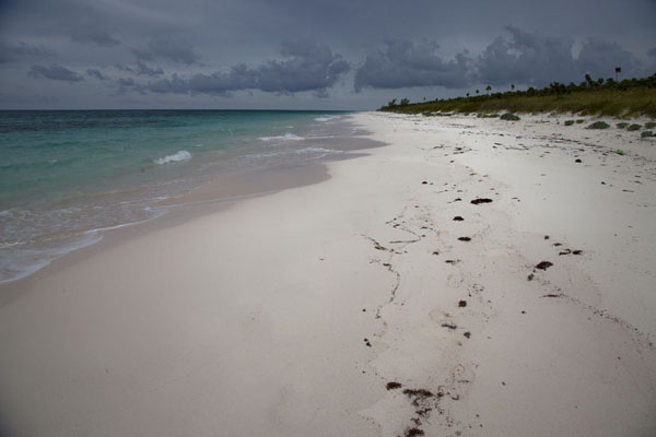 Picture of Columbus Point (Bahamas): Empty beach until the horizon leads south from Greenwood