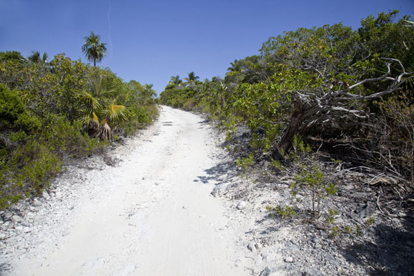 Foto van Dirt track leading to Lighthouse BeachLighthouse Beach - Bahamas