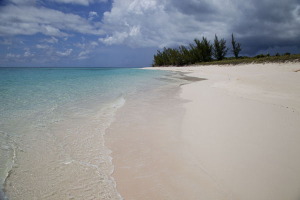 Beach and trees at Man of War Point | Man of War Point | Bahamas