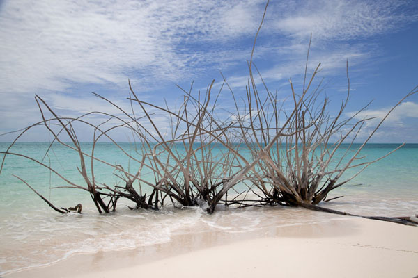 Trees on the pink sand beach south of Man of War Point | Man of War Point | Bahamas