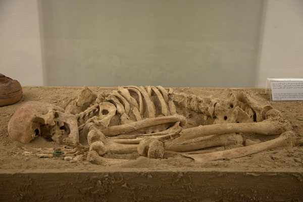 Skeleton on display in the grave section of the National Museum | Bahrain National Museum | Bahrain