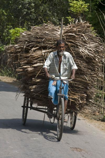 Heavy load of wood on the back of his bike | Bangla Pedal Power | Bangladesh