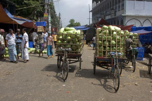Transporting coconuts with special bicycles | Bangla Pedal Power | Bangladesh
