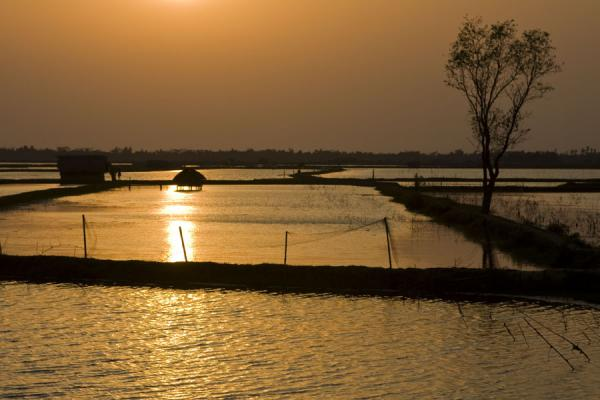 Sunset over landscape with water | Khulna water landscape | Bangladesh