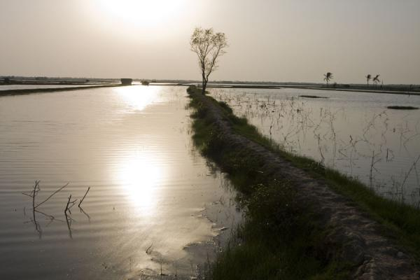 Tree on dyke in water landscape | Khulna water landscape | Bangladesh