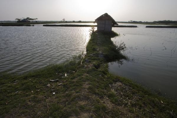 Picture of Water surrounding a house in typical landscape