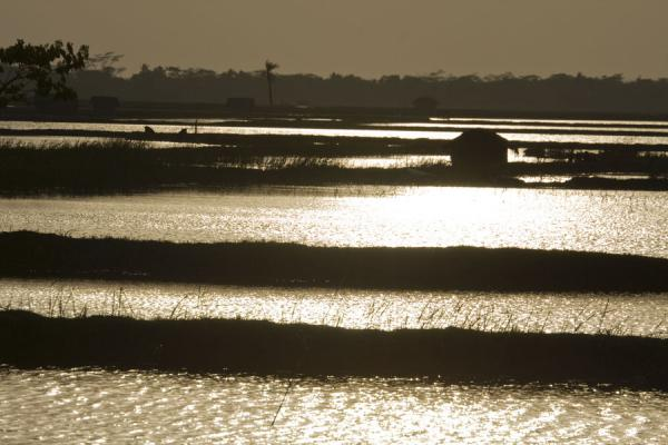 Picture of Khulna water landscape (Bangladesh): Strips of land running through water in the late afternoon