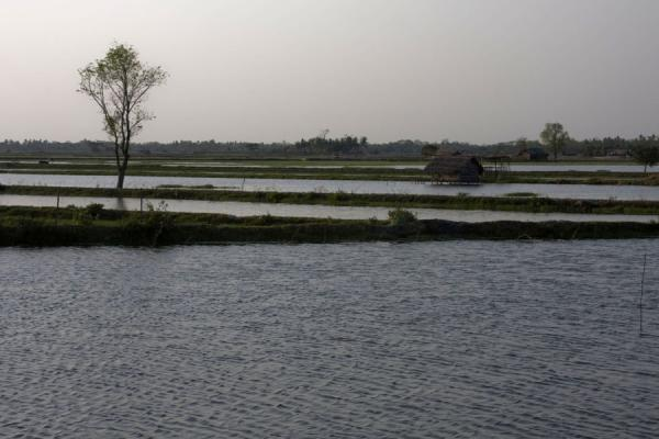 Picture of Khulna water landscape (Bangladesh): Typical landscape between Khulna and Mongla: land, water, and a tree