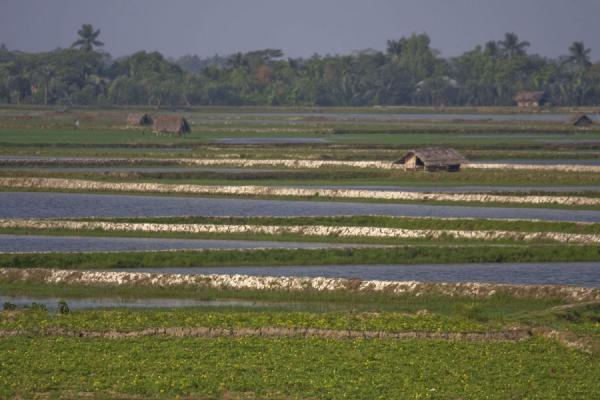 Picture of Bangladesh (Lines in the landscape: man-made river landscape with house)