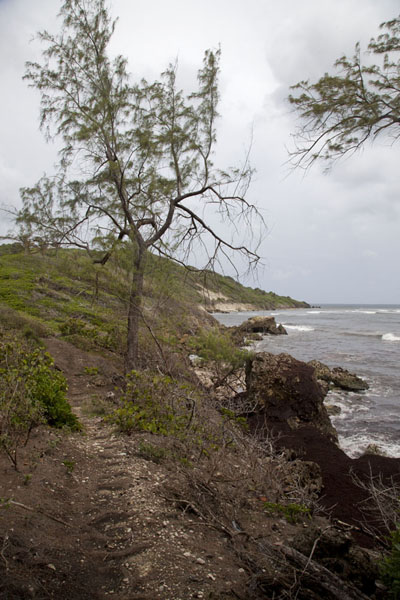 Foto van The trail near BathBarbados oostkust - Barbados