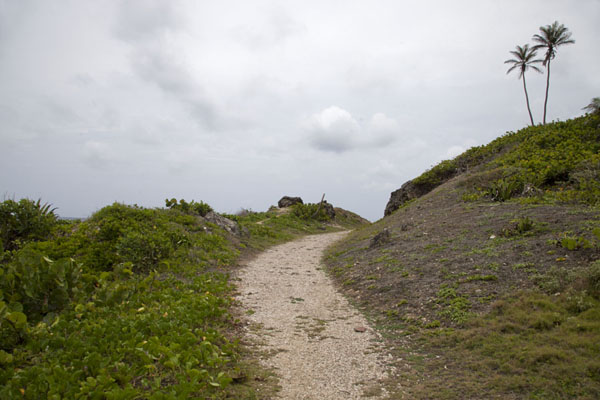 Picture of Well defined trail following the old railroad track at the east coast of Barbados