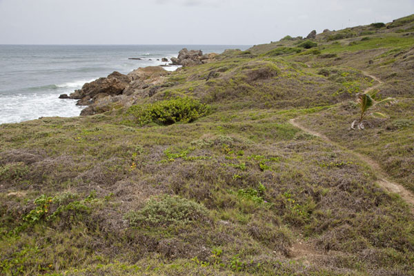 Picture of Coastal trail above the rocky shore of the east coast of Barbados