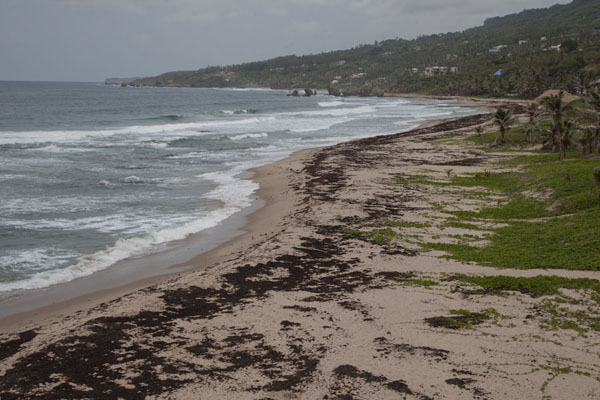 Photo de Beach at CattlewashCote orientale de Barbados - Barbade