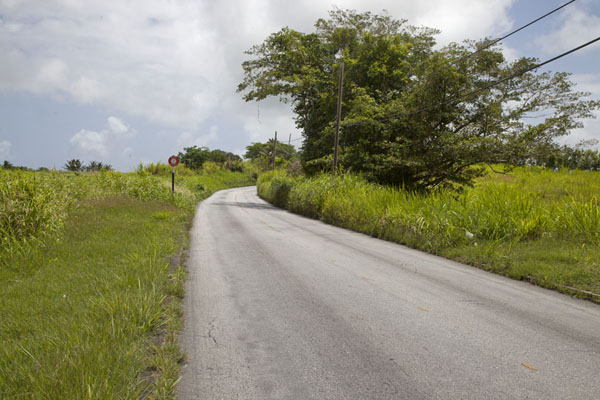 Road through the interior of Barbados | Barbados binnenland | Barbados