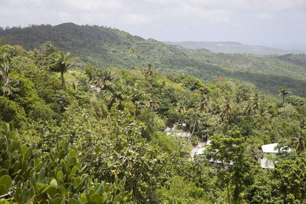 View over the island from the viewpoint at Welchman Hall Gully | Barbados binnenland | Barbados
