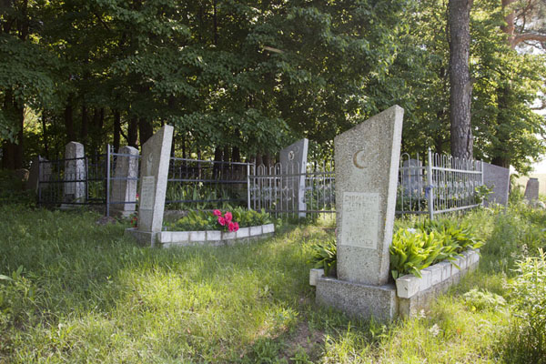 Foto van Some of the graves hidden under the treesMir - Wit-Rusland