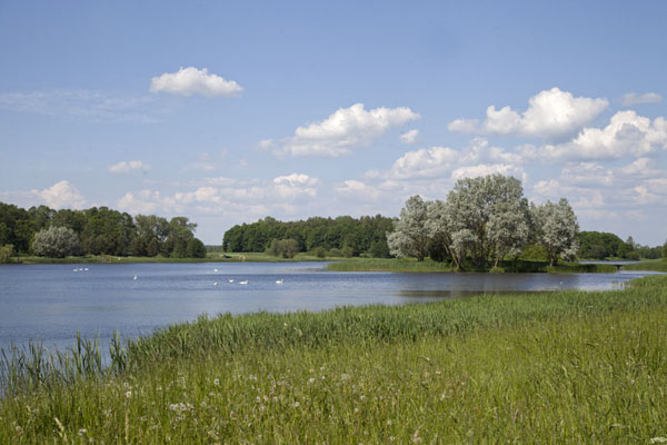 The lake on the estate of the palace of Njasvizh | Njasvizh | Belarus