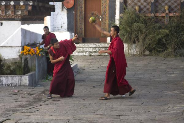 Playful Bhutanese monks in a courtyard - 不丹