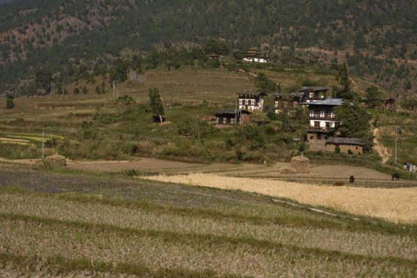 Picture of Chimi Lhakhang (Bhutan): Surrounding landscape of Chimi Lhakhang