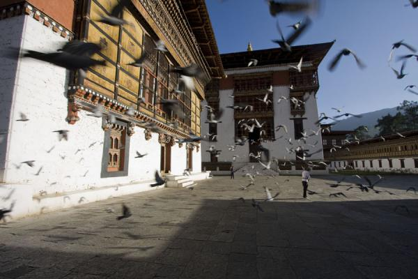 Pigeons flying over the square of Thimphu Dzong | Thimphu Dzong | Bután