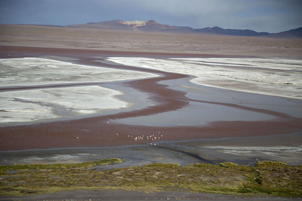 Foto van Flock of flamingoes in the Laguna ColoradaEduardo Avaroa Reserve - Bolivia
