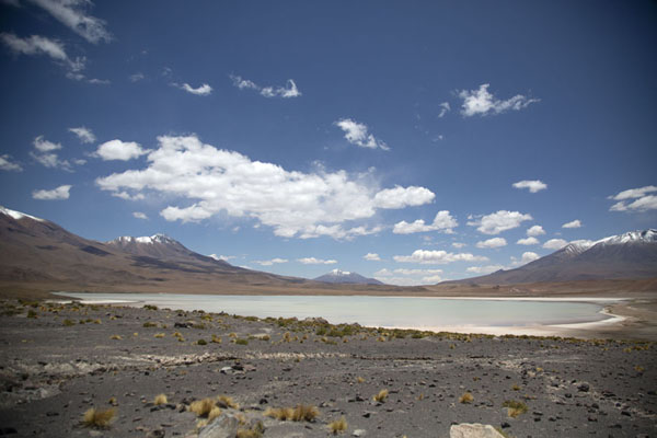 Picture of Laguna Hedionda seen from a little higher upEduardo Avaroa Reserve - Bolivia