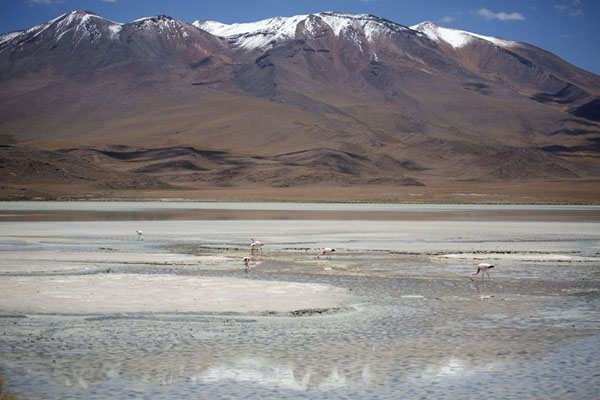 Foto van Flamingoes in the Laguna HediondaEduardo Avaroa Reserve - Bolivia