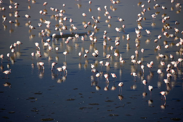 Picture of Flamingoes in Laguna ColoradaEduardo Avaroa Reserve - Bolivia