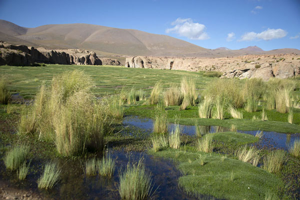 Photo de River with vegetation near Quetena GrandePaysages du sud-ouest de Bolivia - la Bolivie