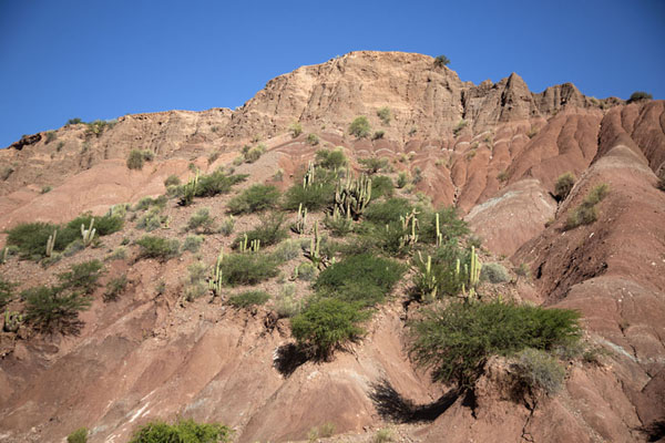 Looking up a side wall of the small canyon with cacti | Tupiza canyons | 破利维亚呢