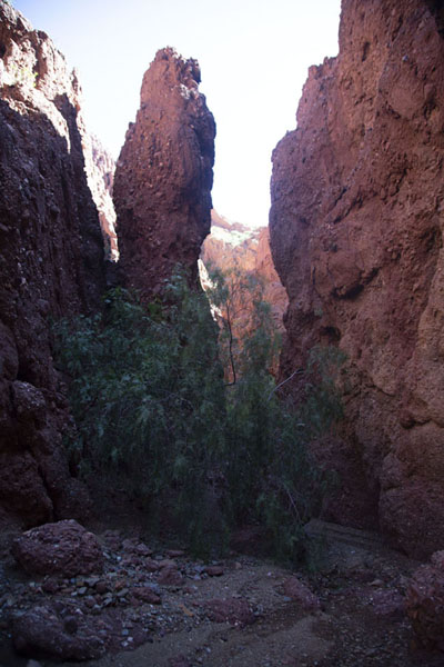 Foto di Vegetation in a narrow section of a canyon - Bolivia - America