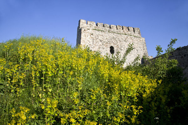 Flowers and tower of the fortress of Jajce | Jajce | Bosnia and Herzegovina