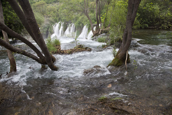 Tree-trunks in the river at the edge of the waterfalls of Kravice | Kravice waterfalls | Bosnia and Herzegovina