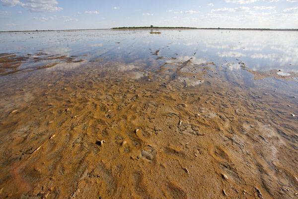 Photo de Kudiakam Pan covered by water - Botswana - Afrique