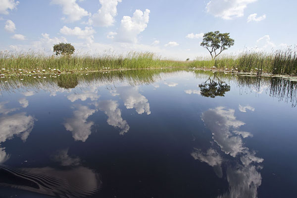 The Okavango delta landscape reflected in the water | Okavango mokoro safari | Botswana