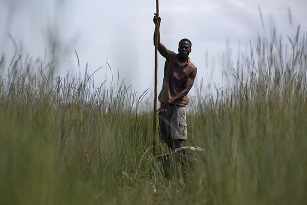Picture of Poler in the grass in the Okavango delta
