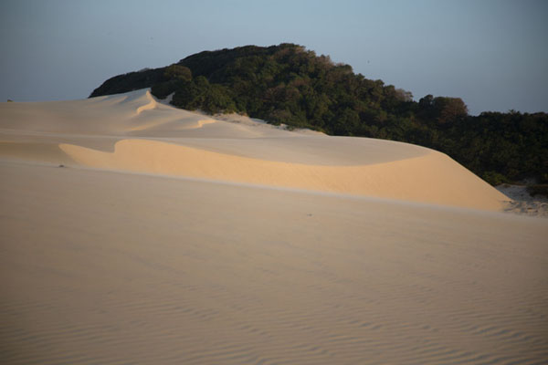Sandy lines with patch of forest behind | Cumbuco sand dunes | Brazil