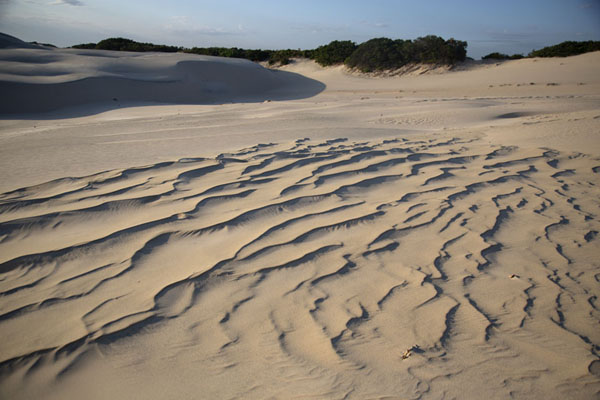 Photo de Sand with a profile in the dune area of CumbucoCumbuco - le Brésil