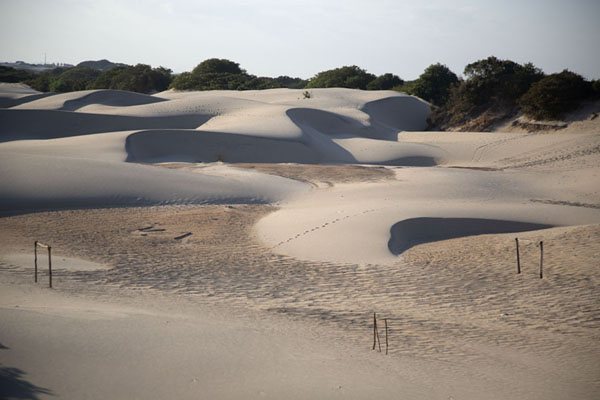Foto van Sand dunes with their elegant lines in the early morningCumbuco - Brazilië