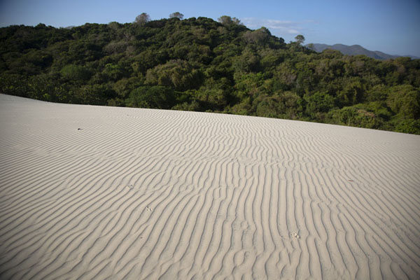Picture of Trees and bushes covering hills beyond a sand dune