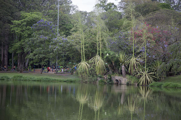 Exotic trees reflected in one of the lakes of Ibirapuera | Parc Ibirapuera | le Brésil