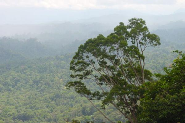 Picture of View on the rainforestBukit Patoi - Brunei