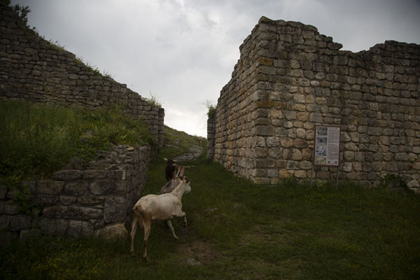Foto di The eastern entrance of Cherven fortress, with a herd of goats running in - Bulgaria - Europa