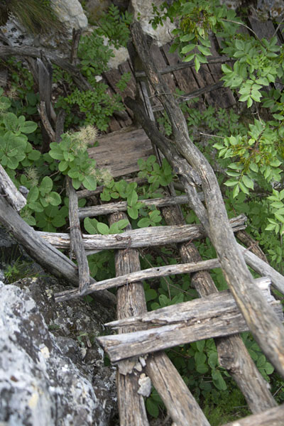 Foto van Wooden ladder leading down the canyon - Bulgarije - Europa