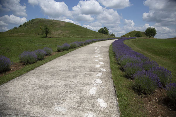 Photo de Pathway between the mounds with lavender on the sideTombeau thrace de Svechtari - Bulgarie