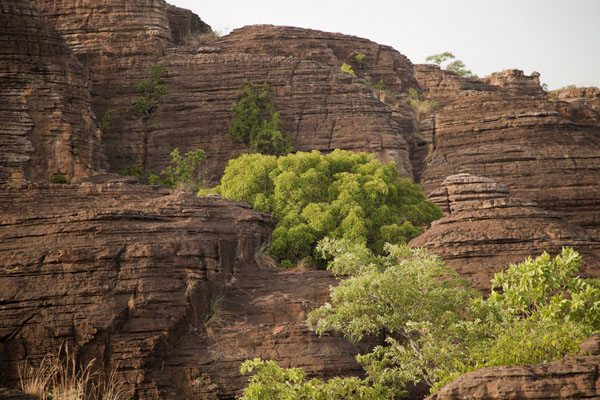 Trees growing amidst the domes of Fabedougou | Koepelrotsen van Fabedougou | Burkina Faso