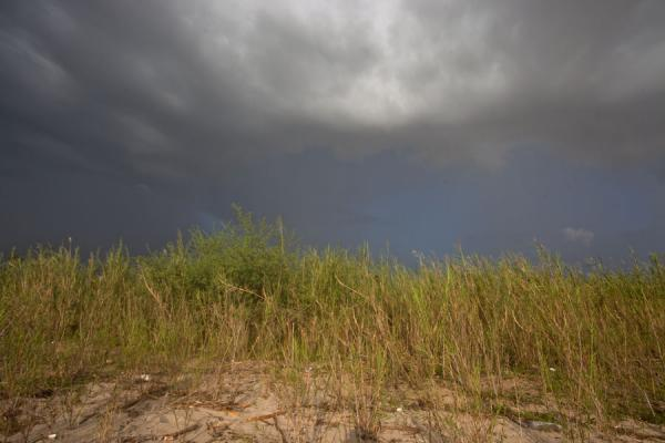 Foto di Dark skies sailing over the grass along the shores of Lake TanganyikaSaga Beach - Burundi