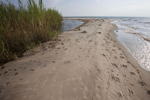 Foto di Sandy stretch of the beachSaga Beach - Burundi