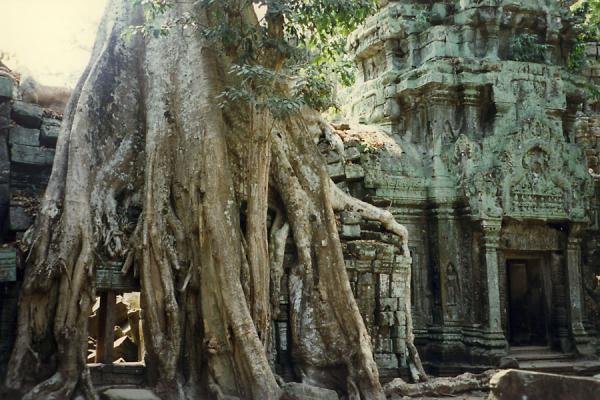 Foto van Temple partly covered by roots of a tree - Cambodja - Azië