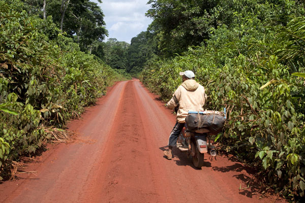 Picture of Motorbike driver on the road to LibongoYokadouma - Cameroon